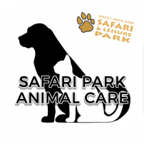 Safari-park-animal-care-cat-image